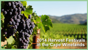 2014 Harvest Festivals in the Cape Winelands