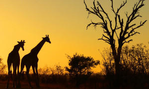 Learn more about South Africa immigration